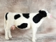 Needle Felted Holstein Cow